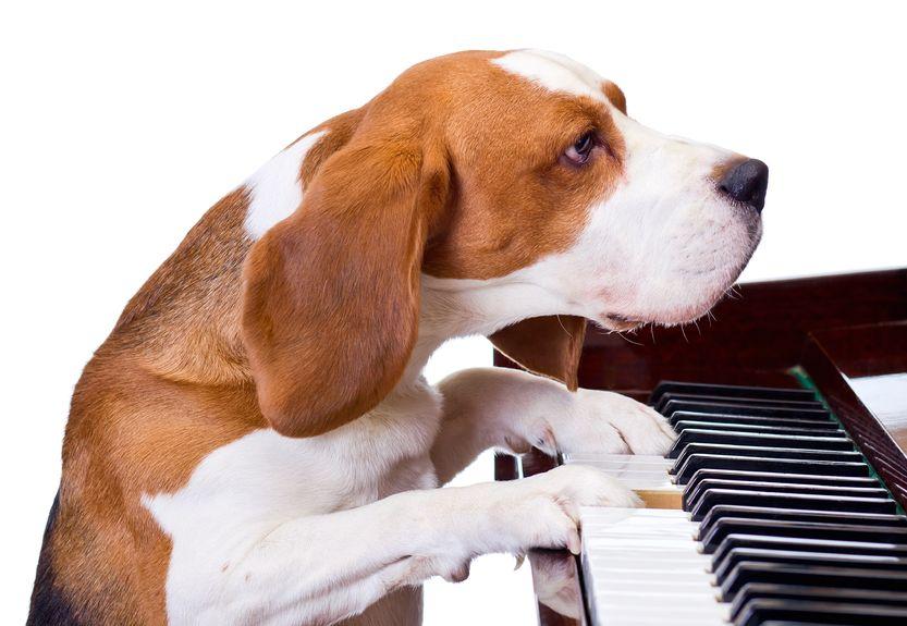 A dog playing the piano (image credit: Kobiz Media)