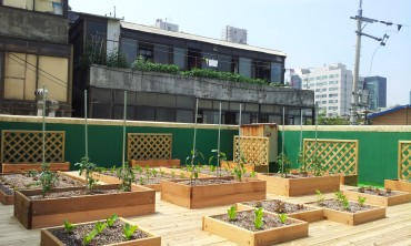 Garden Project, Pioneer in Urban Rooftop Farming