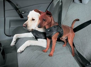 Seatbelt for your cherished family members (image: Flickr, by mockstar (David Poe))