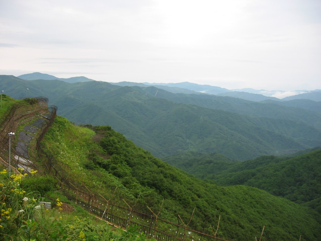 Those going on an exploration in the eastern part of the DMZ will have an exciting time discovering rare flora and fauna such as elk, roe deer, the goat-like goral, and wild boar, as well as various species of migratory birds, endangered fish, and unusual flowers. (image: Friar's Balsam at Flickr)