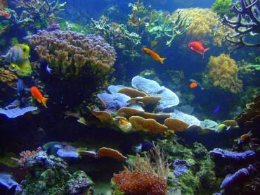 Gyeonggi Gov't Creates 1.64 Sq. Km of Fish Shelters in Its Coastal Waters