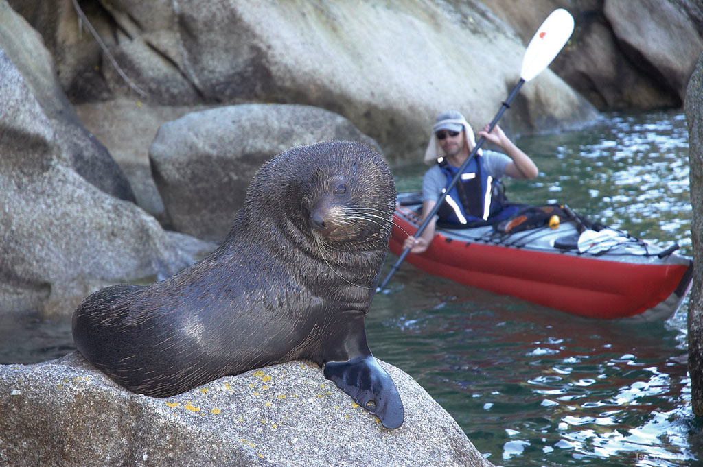 You can choose to take a water taxi to save time or rent a kayak. If you are lucky, you may run into a flock of seals or blue penguins on your way along the coast, a 51-kilometer-long walking track within the Abel Tasman National Park. (image: StoryMarketing)