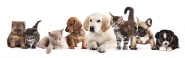 [Kobiz Feature]  Premium Pet Food Market Set to Explode