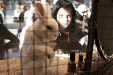 "Cosmetic Brand ""Lush"" to Hold Event to Raise Awareness on Animal Testing"