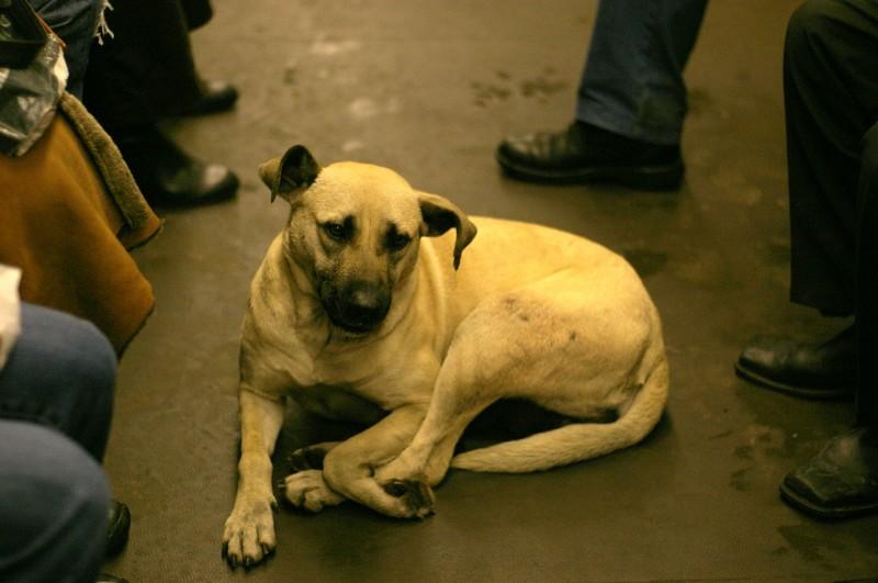True Love Is Right Around the Corner at PetSmart Charities® National Adoption Weekend
