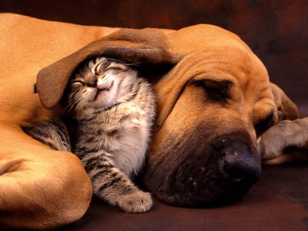 That's what friends are for (image: Katlene Niven/flickr)
