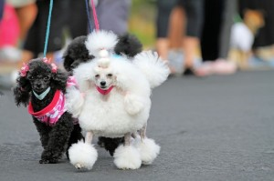 Many singles feel more comfort with pets than when they are with their lovers. (image: kobizmedia)