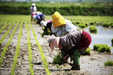 Chuncheon to Hire 100 Foreign Workers to Address Farm Labor Shortage