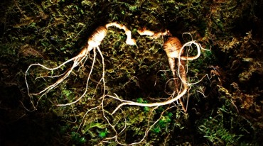 RDA Sponsors Research Project to Decode the Secret of Ginseng