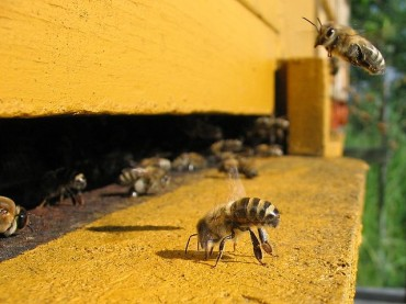 New Findings For Bee Colony Collapse Disorder (CCD) To Be Presented at World Vaccine Congress