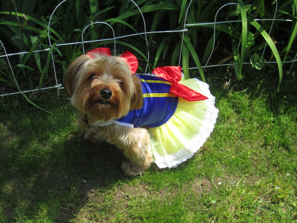 The aging society and low birth rates have resulted in the increase of one-person and two-person households in many of which canine companions increasingly play the role of full family members. Dog Dressed as Snow White (image credit: Pets Adviser/Flickr)