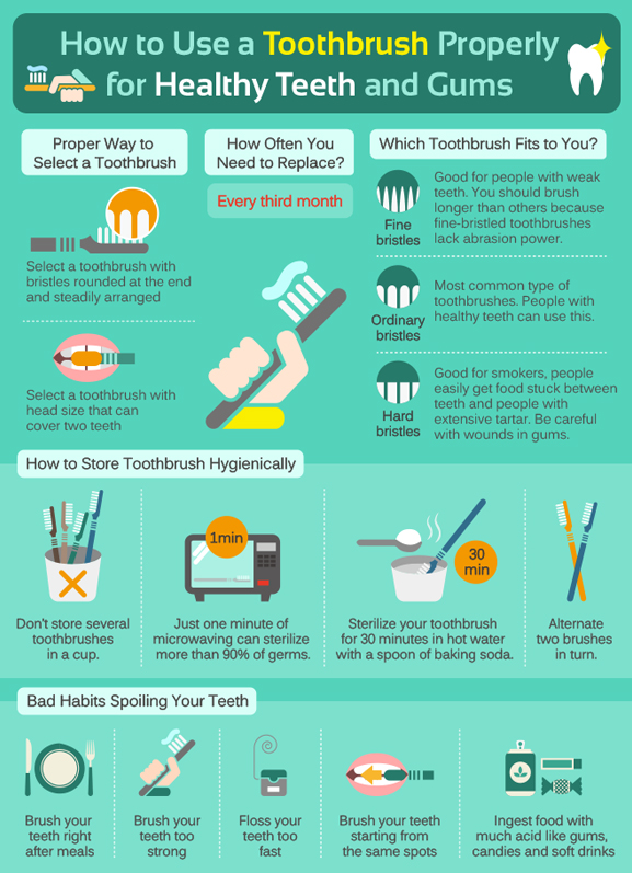 [Infographics] How to Use a Toothbrush Properly for Healthy Teeth and Gums