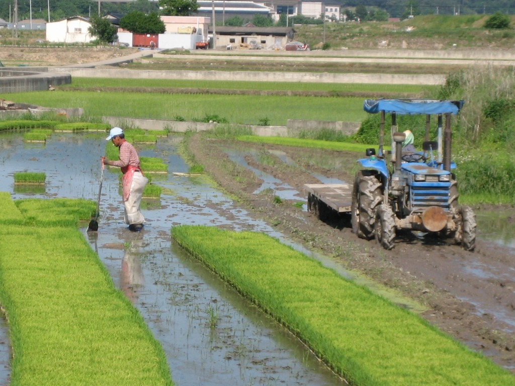 Korea-Gyeongju-Farmer and cultivator in a paddy field (Wikimedia Commons)