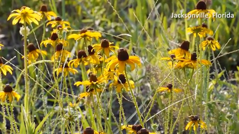 Wildflowers and Wildlife Thrive at Bacardi Bottling Facility