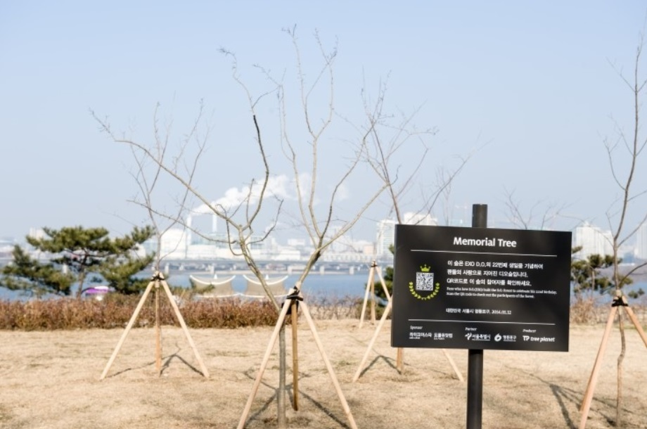Memorial Tree for DIO, Another Member of EXO (image: TreePlanet)