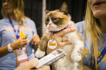 Friskies® is on the Prowl for the Next Internet Cat Superstar