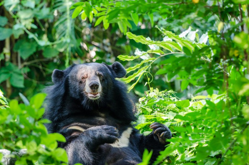 [Feature] Ecological Corridor to Link Mt. Jiri with Mt. Deogyu for Asian Black Bears