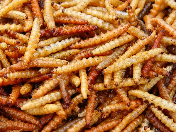 Mealworms Officially Available on Ingredients of Human Foods