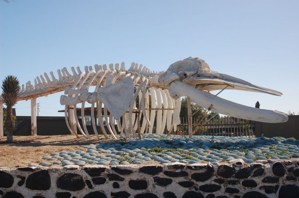 Whale bones can be used for making artificial bones (image: TravelingLao/flickr)