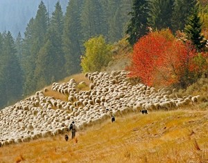 Idaho's Trailing of the Sheep Festival Offers Authentic Family Fun and Learning