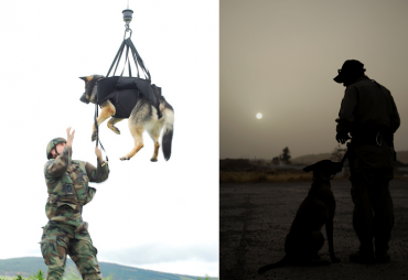 Court Acknowledges Military Dog Handler as Person of National Merit