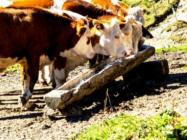 RDA to Develop and Commercialize Highly Efficient Animal Farm Facilities