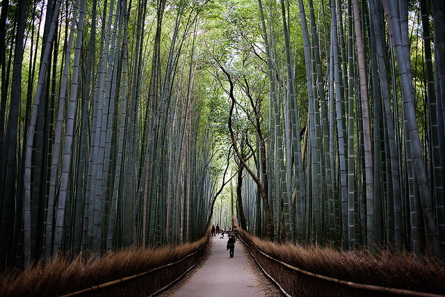 """The concept of bamboo fabric is not new. But rising need for this kind of eco-friendly textiles is well illustrave of increasingly keen interest in """"well-being"""" or wellness even in apparels among consumers. (image: Arashiyama bamboo forest by Curt Smith/flickr)"""
