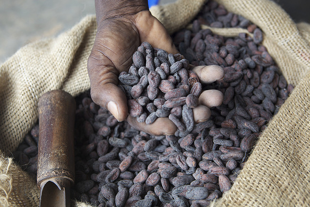 Ebola Epidemic Hurts Cocoa Farmers and Chocolate Producers
