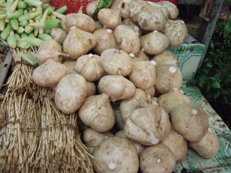 Climate Change Drives Korea to Develop Jicama As Alternative Plant