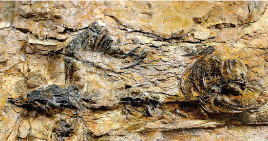 Smallest-ever Meat-eating Dinosaur Fossil Found in Korea's Southeast