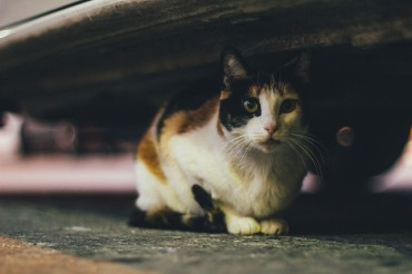 DaumKakao and Seoul City Team Up to Protect Street Cats