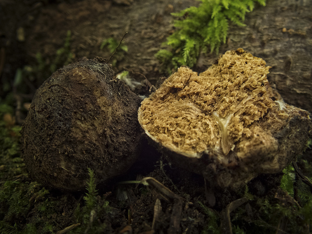 S. Jeolla Province Succeeds in Cultivating Truffle Mushrooms
