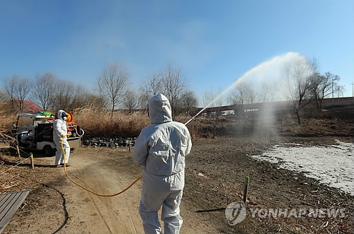 Restriction zones were established, and control measures are ongoing after a highly dangerous case of AI was detected on Seongnam Moran market, a large traditional market located near Seoul. (image: quarantine measures are done in Gangseo Marsh Ecological Park/Yonhap)