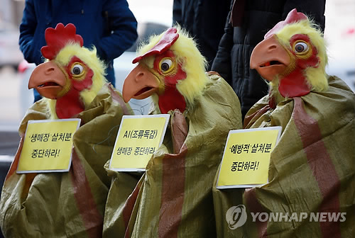 Factory Farms Weaken Animals' Immunity: Korea Association for Animal Protection