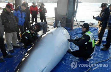 Third Minke Whale Found Stranded in Just 9 Days