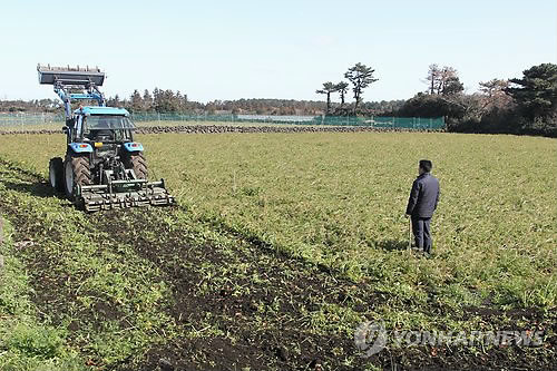 4,000 Tons of Jeju Carrots Discarded to Stabilize Prices