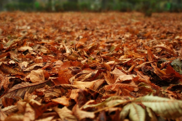 Fallen leaves are a great source of inspiration among artists and farmers. (image: November Leaves by Cristian V./flickr)