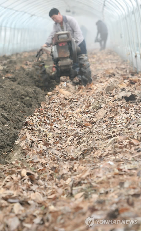 The compost made out of leaves not only makes the land fertile, but also serves to protect against harmful insects. (image: Yonhap)