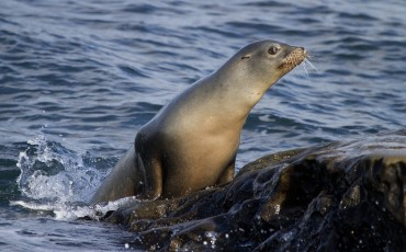 Bones of Dokdo Sea Lions Restored in 3-D