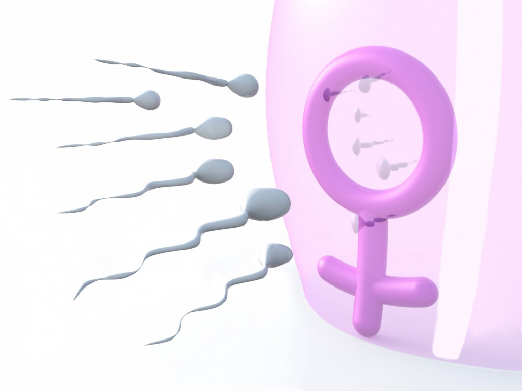 The research team is hoping that the results will serve as a valuable asset for future research to isolate links between stress hormones and infertility in humans. (image: Kobiz Media / Korea Bizwire)