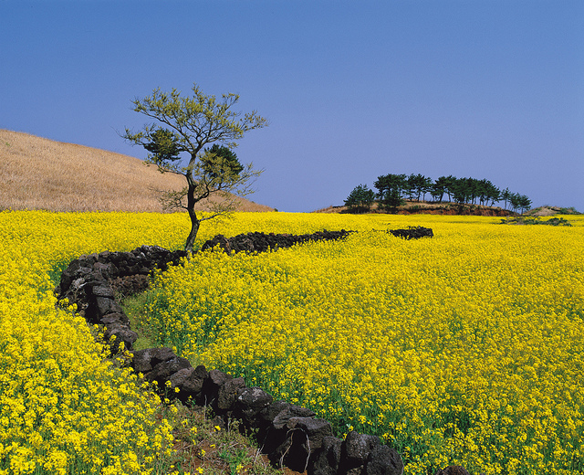 Return-to-Farm Population in Jeju Soars 32 Times in Five Years