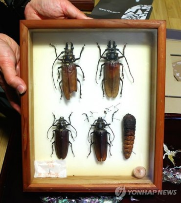 Korean Entomologist Donates Lifetime Collection of 2,000 Insect Specimens