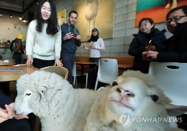 Meet A Lovely Pair of Sheep at A Cafe in Seoul