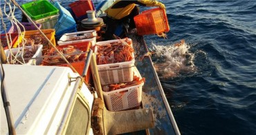 Pohang City at War against Illegal Poaching and Distribution of Female Snow Crabs