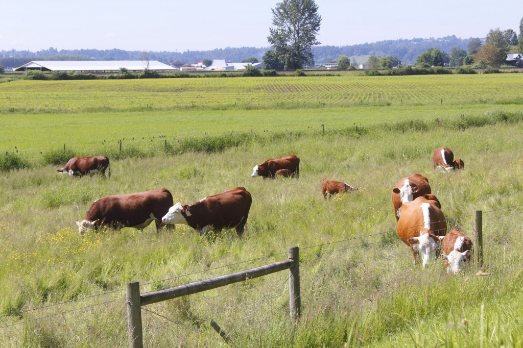 South Korea has banned Canadian beef following the outbreak of the mad cow disease in the nation in 2011 and resumed imports in March 2012. (image credit: Kobiz Media)