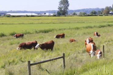 Mad Cow Outbreak Prompts Korea to Suspend Quarantine Inspections of Canadian Beef