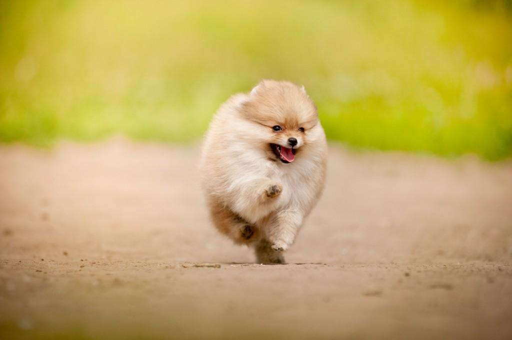 Come over here pooch! (image credit: Kobiz Media)