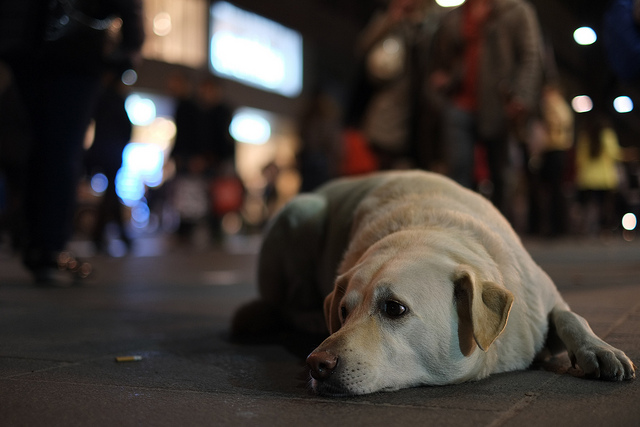 Seoul City Supports Neutralization to Prevent Pet Abandonment