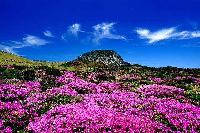 Nearly Half of Chinese Tourists to S. Korea Visit Jeju Island