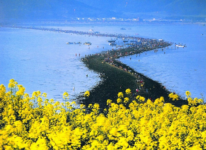 Jindo Sea-Parting Festival, Korea's Moses Miracle, Attracts 80,000 Foreign Tourists